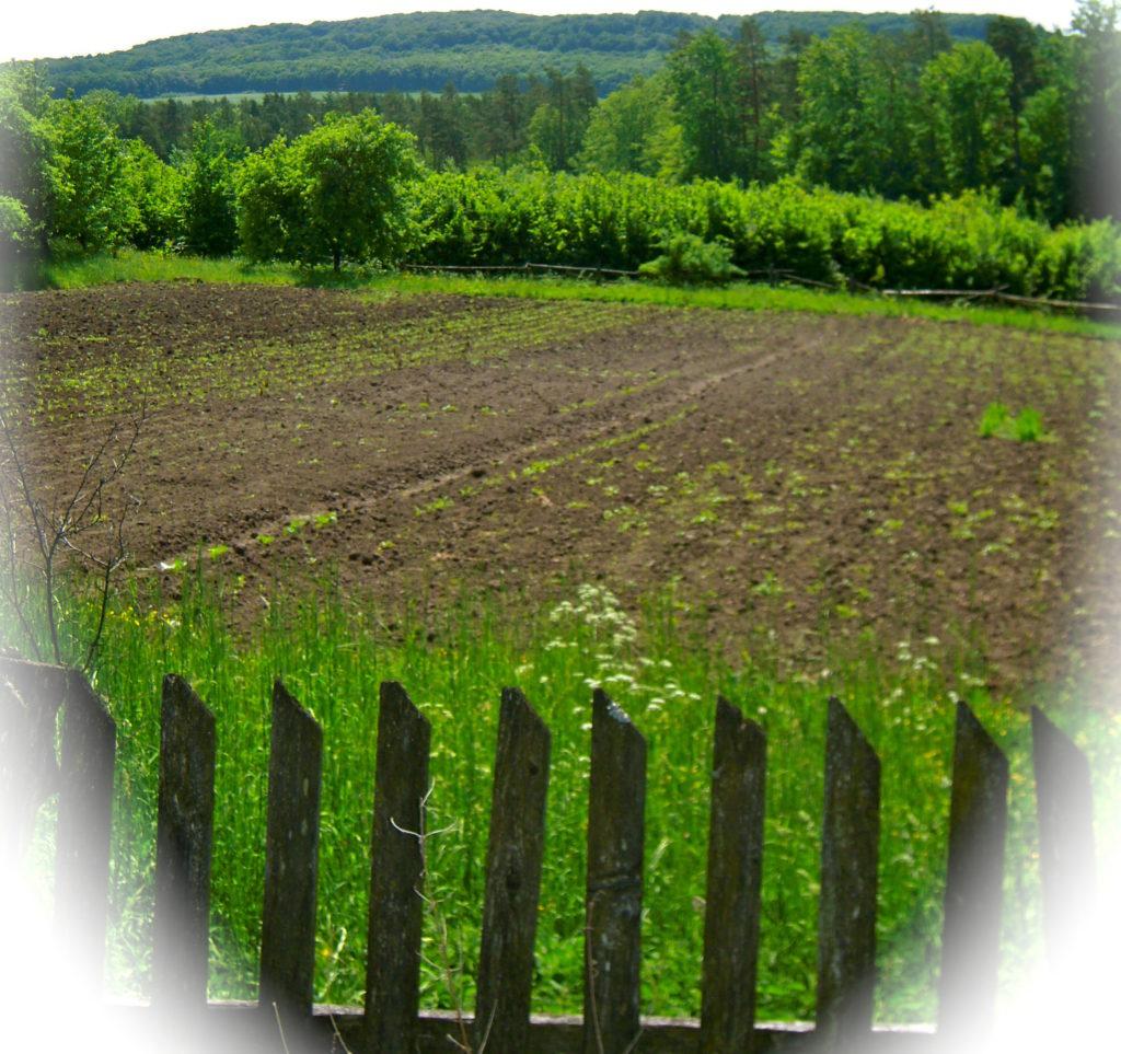 black-soil